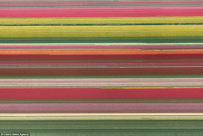 Tulip fields from above 02
